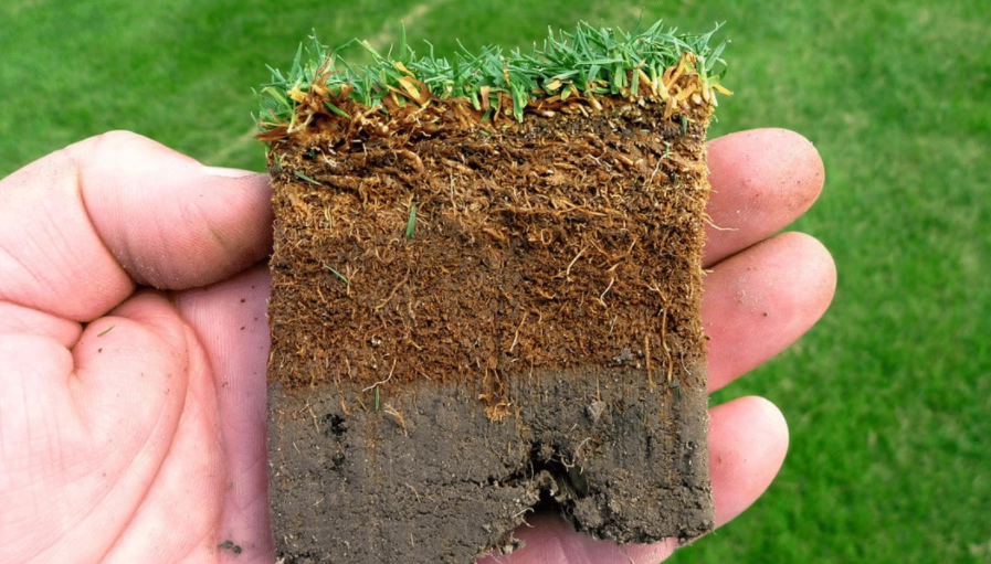 Thatch Causes