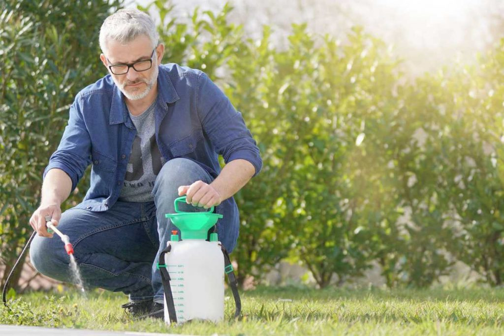 Treat lawn with weed killer