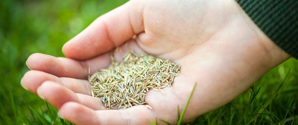 lawn care and preventer seed
